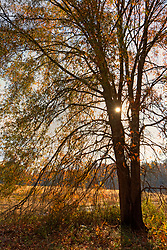 Stock photo of the sun starting to set behind a tree on remote farmland
