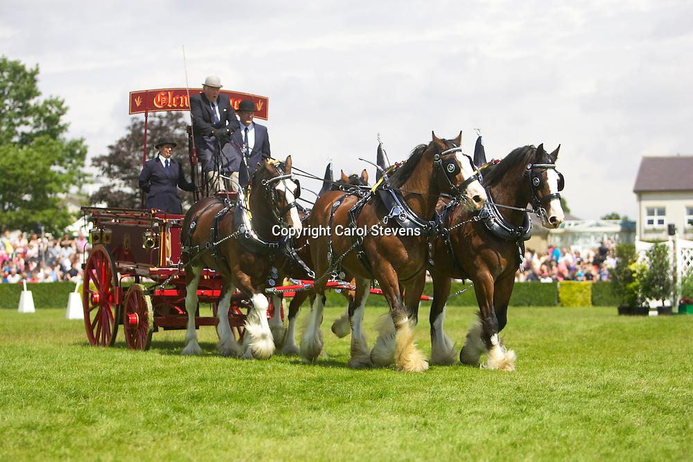 Alasdair Govan's Glenskenno Clydesdale Team of Edward, Thomas, Mac & Donald