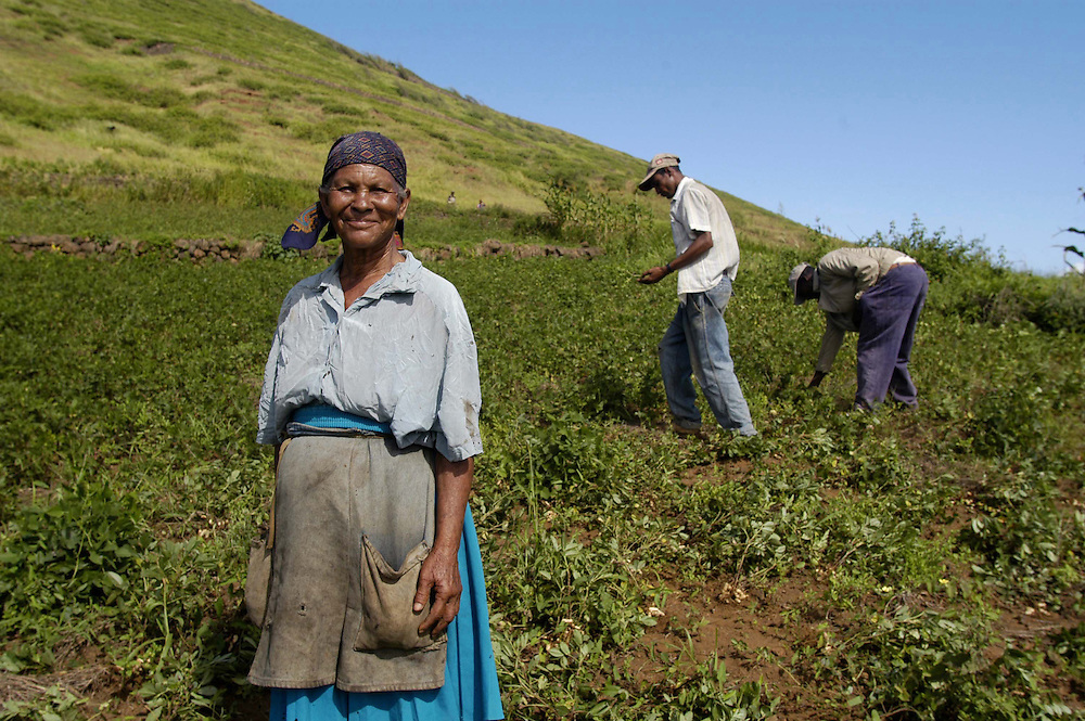 Fogo Island, Cape Verde             October 22, 2003.farming, women, elderly.Maria Conceiçao, left, begins the groundnut harvest with her family in Achada Fanseca, Fogo Island, Cape Verde, October 22, 2003. Photo by Lori Waselchuk/South Photographs