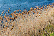 Reedgrass, Mecox Bay, Summer Home of Cliff Robertson,  36 Morrison Lane, Water Mill, Long Island, New York
