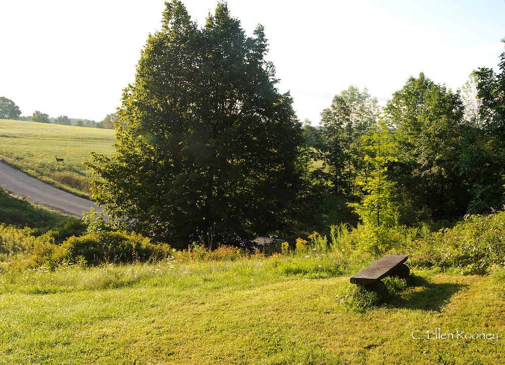 A stone bench overlooking fields and a deer on a hillside in Westerlo, New York, U.S.A.