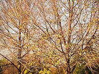 Trees in Winter at The Huntington Botanical Gardens, San Marino, California