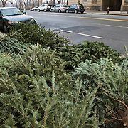 Christmas trees lying on a curb in Manhattan waiting to be picked up to be recycled.