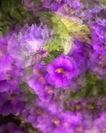 Pansies, Flowers, Charleston,South Carolina, Battery Charleston, South Caolina`