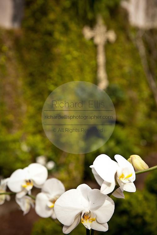 Orchid in a garden in Savannah, Georgia, USA.
