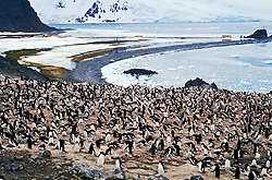 Antartida. 12/1991..Pinguins..Foto ©Adri Felden/Argosfoto.www.argosfoto.com.br