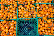 Orange Cherry Tomatoes, Old Monterey Farmers Market, California