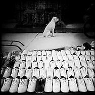 Dog sits in the middle of an isle at Rabinal's market. Rabinal, Baja Verapaz, Guatemala. May 15, 2014.