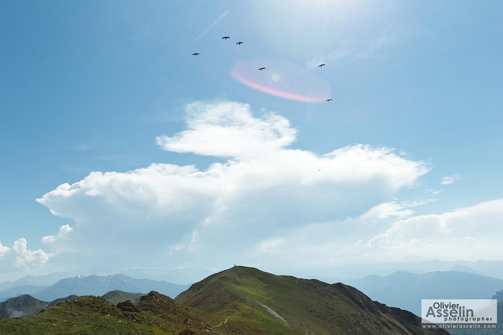 Flock of birds flying about Sommet de Pique Poque near Mount Cagire, Midi-Pyrenees, France.