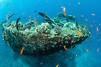A wreck is covered by marine life.