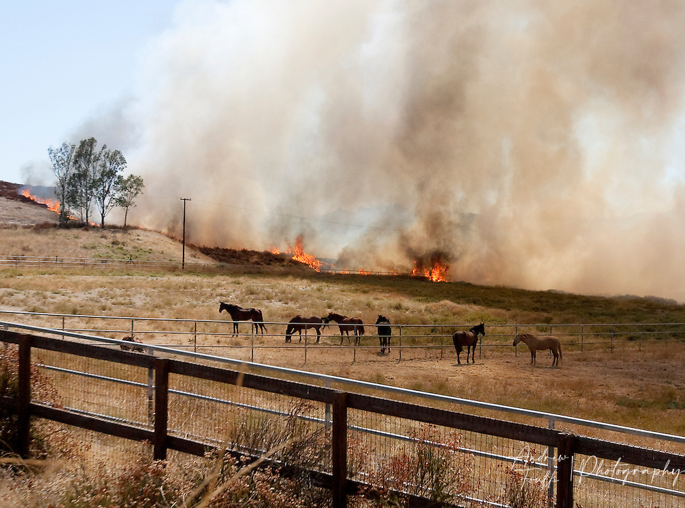/Andrew Foulk/ For The Californian/ .Flames surround the Menifee Meadows Equestrian Center off of Briggs road in Menifee during a brush fire that consumed over 25 acres.