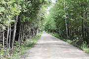 Sherman Road, a long, single lane path, is the only means of access to the southwestern shores of South Manistique Lake near Curtis, Michigan. This is a densely forested wetland, so one hopes not to encounter another vehicle coming the other way.