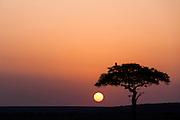 Vulture in a tree silhouetted against an orange bushveld sunset in the Masai Mara Reserve, Kenya, Africa (photo by Wildlife Photographer Matt Considine)