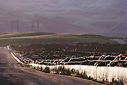 Harris Ranch feeding lot in Coalinga, California. San Joaquin Valley. California's largest feed lot with up to 100,000 head of cattle. Coalinga, California. San Joaquin Valley. USA [[From the company: THE HARRIS FARMS GROUP OF COMPANIES. Harris Farms, Inc. is one of the nation's largest, vertically integrated family owned agribusinesses]].
