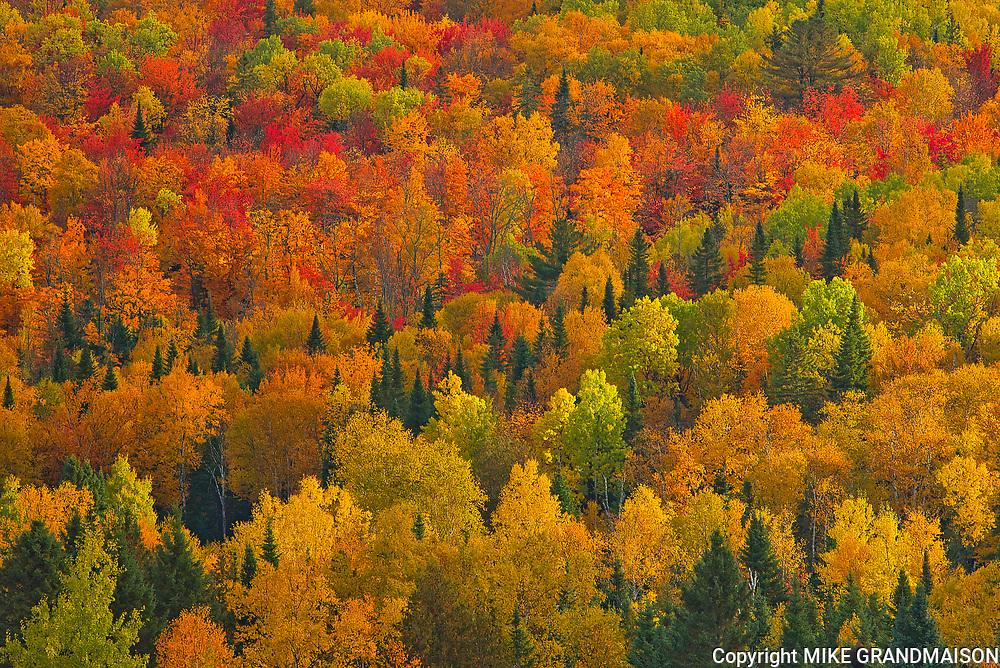 Acadian forest in autumn foliage. Near Edmunston. Madawaska County,<br />Saint-Joseph<br />New Brunswick<br />Canada