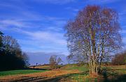 A293K2 Silver birch and meadow fields landscape Suffolk Sandlings England