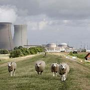 Nederland, Hedwigepolder, gemeente Hulst  19 juni 2010 20100619    ..Belgische kerncentrale Doel, gezien vanaf de scheldedijk van de Hertogin Hedwigepolder in Zeeuws-Vlaanderen, de Nederlandse polder die ontpoldert zou moeten worden als de Westerschelde uitgediept word. Op de voorgrond schapen, In de achtergrond de Belgische Kerncentrale van Doel. kernenergie atoomcentrale Kernreactor Kernreactoren kerncentrales schapen schaap grazende Nuclear power plant vee Atoomstroom  ruimtelijke, ruimtelijke omgeving, ruimtelijke ordening, rust, rustgevend, rustiek, rustieke, rustieke omgeving, rustig, rustige, Samen werken met water, schaap, schapen, schepping, schone lucht, schoon, schoonheid, sea level, sealevel, sheep, space, sprankelend, sprankelende, stijging zeespiegel, stil, stilleven, stilte, stock, stockbeeld, streek, sustainable, tegen, terrein, typerend, typical dutch landscape, typisch hollands, typisch hollands landschap, typische, uitgestrektheid, uitstoot, uitstooten, uitzicht, uniek, unieke, veiligheid, vergezicht, vergezichten, verte, vervuiling, vlaams, vlaamse, Vlaanderen, vrij, vrijheid weer, water level, waterbeheer, Waterbeheerplan, waterhuishouding, waterkering, waterkeringen, Waterkeringen, waterlevel, watermanagement, waterniveau, waterpeil, waterplan, waterproblematiek, waterstaatkundige, waterstand, watersysteem, waterveiligheid, waterveiligheid en gebiedsontwikkeling, waterwerken, wei, weide, weidegang, weiland, weiland. Landscape, wijdheid, wijds, wijdsheid, wit, witte, wolk, wolken, wolkenpartij, zeeland, Zeeuws, zeeuws vlaanderen, zeeuws-vlaanderen, Zeeuwse, zo vrij als een vogel, ZVL,.. Foto: David Rozing