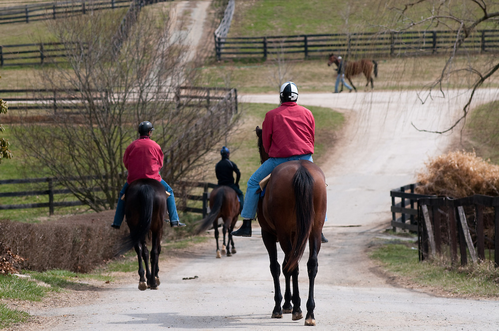 Horses and riders trotting down farm road
