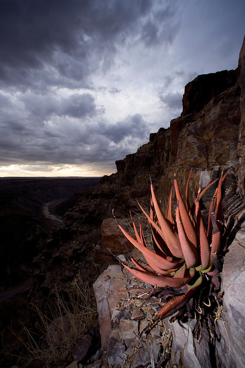 Africa, Namibia, Fish River Canyon National Park, Hardy desert plants on rocky slopes above Fish River Canyon