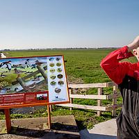 Nederland, Amstelveen, 27 maart 2017.<br /> Het gaat slecht met de weidevogel ondanks alle inspanningen.<br />Sinds 1960 is het aantal boerenlandvogels met 60 tot 70 procent teruggelopen. Het aantal patrijzen, zomertortels, ringmussen is gedecimeerd en van de grutto's is tweederde verdwenen. Sommige vogelsoorten komen in grote delen van Nederland bijna niet meer voor blijkt uit cijfers van het Centraal Bureau voor de Statistiek. (CBS) Deze achteruitgang kan volgens CBS niet los worden gezien van de intensivering van de landbouw. <br />Op de foto: Boer Kees Lambalk aan de Ringdijk 26 in Amstelveen heeft in het voorjaar de zorg over zo'n zestig nesten op zijn land in de Bovenkerkerpolder.<br /><br /><br /><br /><br /><br />Foto: Jean-Pierre Jans