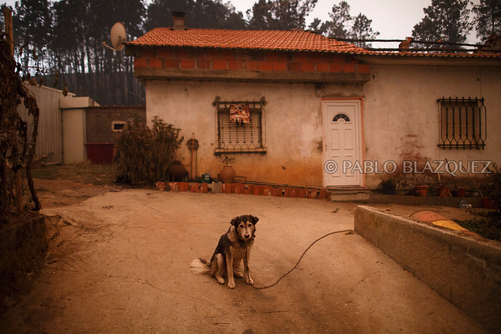 LEIRIA, PORTUGAL - JUNE 18:  A dog sits outside a burned house after a wildfire took dozens of lives on June 18, 2017 near Castanheira de Pera, in Leiria district, Portugal. On Saturday night, a forest fire became uncontrollable in the Leiria district, killing at least 62 people and leaving many injured. Some of the victims died inside their cars as they tried to flee the area.  (Photo by Pablo Blazquez Dominguez/Getty Images)