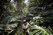 Rangers on patrol in the forest. The forest rangers are employed by the Ministry of Environment but sponsored by Flora and Fauna International who pays them 75% of their salary and provides training and accommodation. They undertake regular patrols in to the Samkos Wildlife Sancturary which is part of the Cardamom Mountains Nature Reserve looking for illegal activites such as logging, poaching, land encroachment and the production of the illegal substance sassafras oil. The Cardamom Mountains and surrounding forests is the largest and most pristine area of intact forest in SE Asia. Covering an area of 2.5 million acres it became one of the last strong holds of a retreating Khmer Rouge. Their presence helped preserve the forest as no-one dared to venture inside. But with the Khmer Rouge gone, it faces new dangers from poachers, loggers and illegal drug factories. In charge of protecting this vast forest are a handful of rangers who's job it is to track down and arrest those who are helping to destroy this delicate habitat.