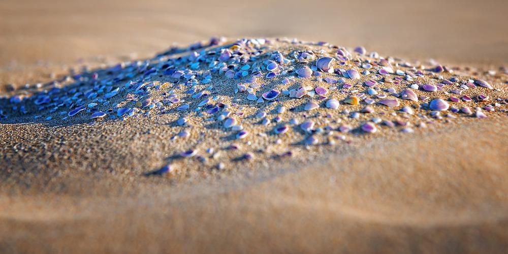 Sea shells in sand at Lagoon Khenifiss (Lac Naila), Morocco.
