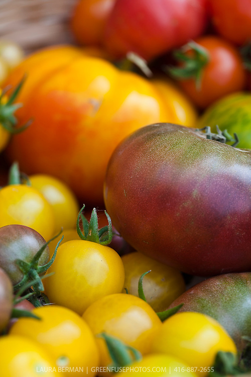A basket of colorful heirloom tomatoes, including Gold Nugget, black cherry, white cherry, Red Pear, Black Zebra, Black Prince,OId German, Roma, Green Zebra, Chadwick Cherry, and Matina varieties.
