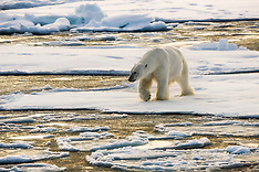 Svalbard #26 2015