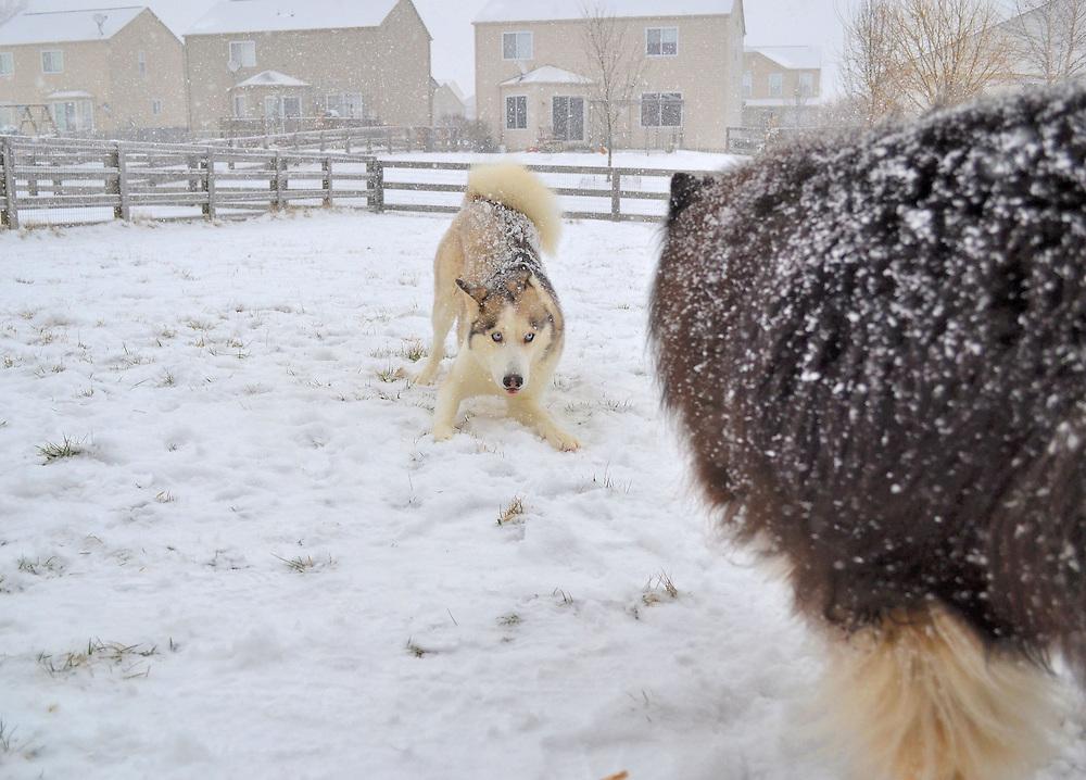 Baylee and Jackson, Ohio Dogs