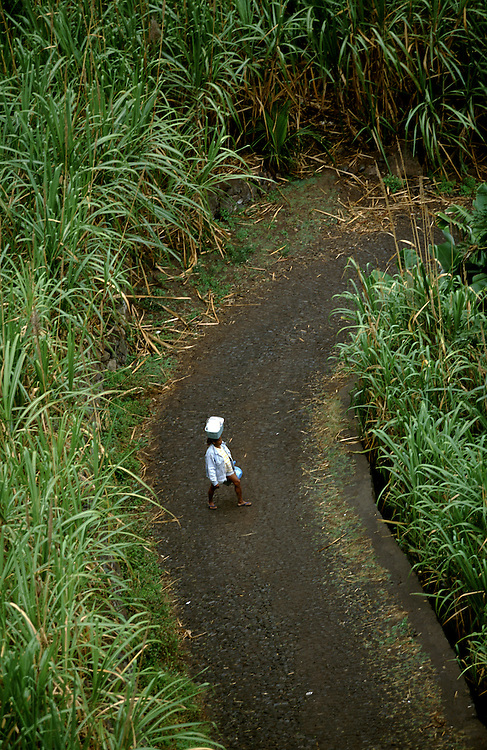 A woman carrying a bag on her head in a road sorrounded by sugar cane in the northeast zone of Santo Antao island. This area has a microclimate that makes it the only part of the archipelago where it rains regularly and where many vegetables and fruits grow.