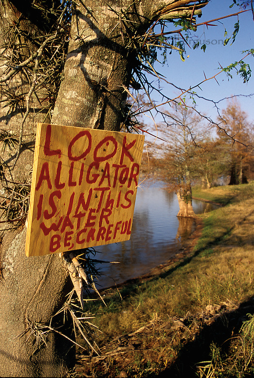 "I didn't see any alligators when I found this sign – ""Look Alligator is in this water Be Careful."" But I always take such warnings seriously. I have seen them cross the road during high water, and even followed one with a camera once. When he stopped and turned my way, I realized it was a terrible idea."