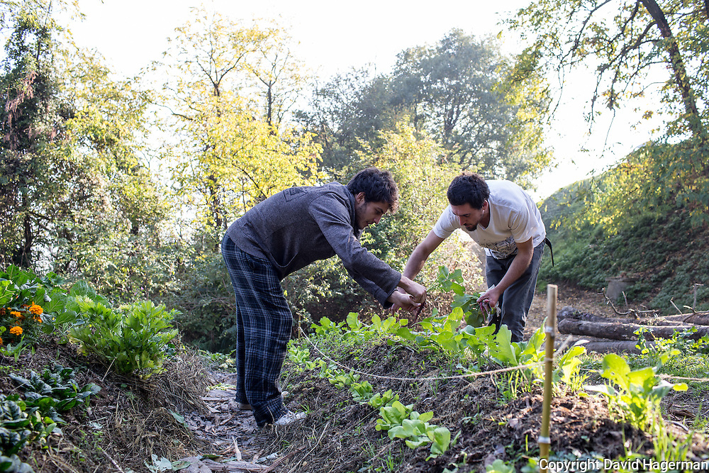 Luca Bonelli (left) and Filipo Laguzzi harvest vegetables from the gardens at  Birrificiao Agricole di Montcalieri