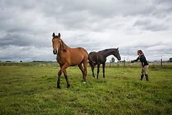 Fokkerij Evelyne Van Vreckom<br /> V.V. Stables - Lennik 2014<br /> © Dirk Caremans