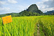 Laos, Vang Vieng, Path through rice fields leading to mountains. Vang Vieng, Laos,