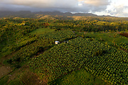 Fruit and vegetable plantations in the north of the island