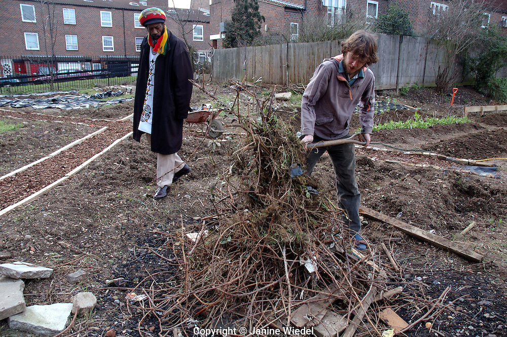 Preparing soil clearing and composting the land  planting vegetables in inner city urban garden allotment.