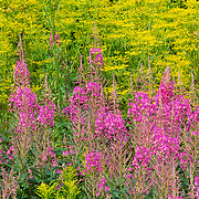 Wildflowers along the roadside