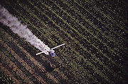 Crop dusting. Dusting wine grape vineyards with sulphur in Sonoma, California, USA.