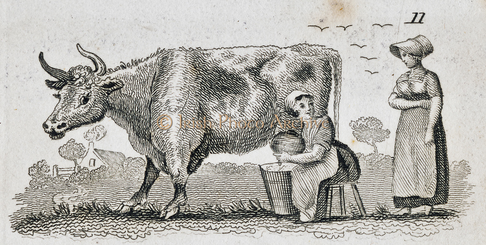 Milking a cow in the fields. Engraving, 1835.