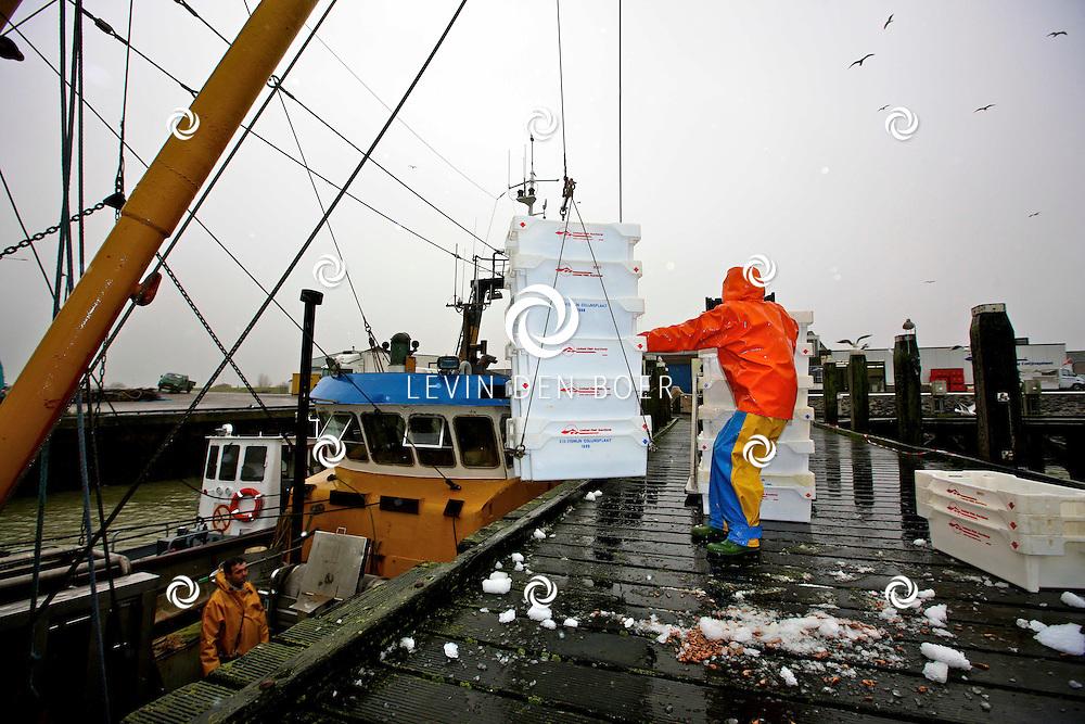 COLIJNSPLAAT - Op de visafslag bij Colijn werd een garnalenkotter gelost. Deze garnalen werden direct naar de visveiling gebracht om verkocht te worden. FOTO LEVIN DEN BOER - PERSFOTO.NU