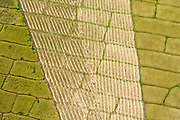 SRI LANKA. Patterns in a mechanically harvested rice or paddy field.