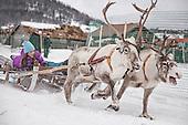 Reindeer herding and sami life - Sørsamisk reindrift