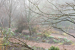 Foggy morning in the woodland garden at Glebe Cottage