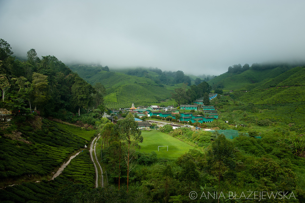 Malaysia. Green slopes of tea fields in Cameron Highlands.