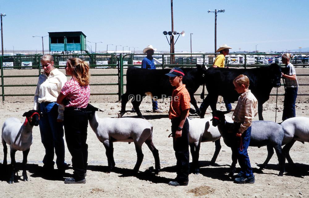 domestic farm animal judging state fair Rawlins Wyoming USA