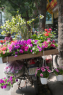 Pots of petunias and geraniums for sale on the back of a motorcycle in Hoang Hoa Tham Street, Hanoi, Vietnam, Southeast Asia