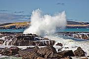 Curio Bay, crashing wave 1