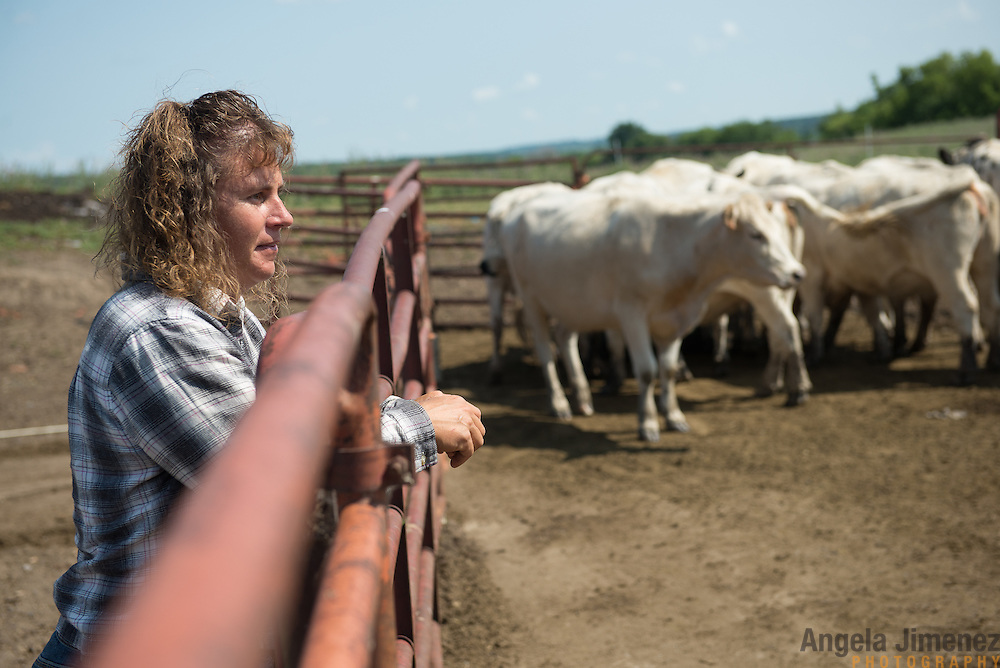 Rancher Christina Traeger stands by the dry lot with her grass-fed British White cattle at her Rolling Hills Traeger Ranch in Avon, Minnesota. [ Angela Jimenez/Special to the Star-Tribune  angelajime@gmail.com Assignment #20035502A_ SLUG: RANCH_ EXTRA INFORMATION: Christina Traeger, who raises grass-fed British White cattle on her 75-acre Rolling Hills Ranch in Avon, Minnesota with the help of her daughters Rebecca, 20 and Hailey, 15, takes a tour of her ranch on July 29, 2014. She is one of the few women ranchers in the area and is an advocate of healthy eating. Christina, who farms on land that has been in her family for generations, sells her meat and produce at farmers markets and is hosting a national conference next month.