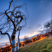 "Stainless steel dendritic tree sculpture at the Nelson Atkins Museum of Art, ""Ferment,"" by Roxy Paine. Kansas City, Missouri."